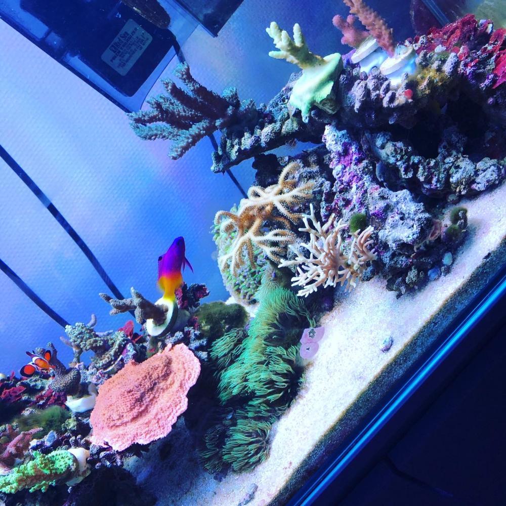 魚とサンゴのヒュージョン